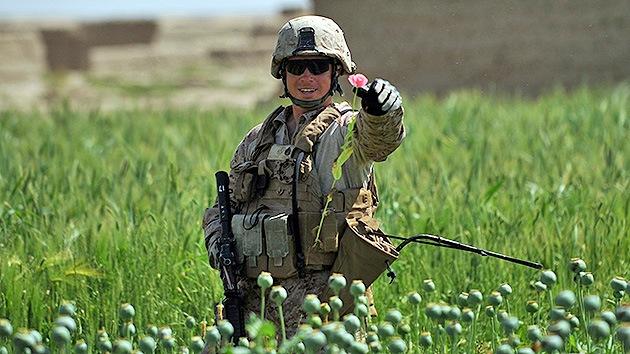 adormidera afganistan